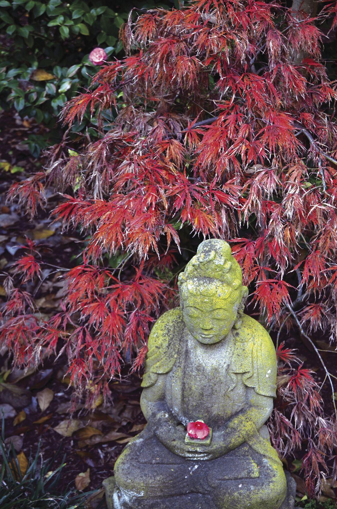 Travel Lotusland Japanese Garden Photo Essay