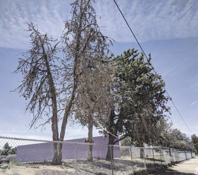 Keppel trees