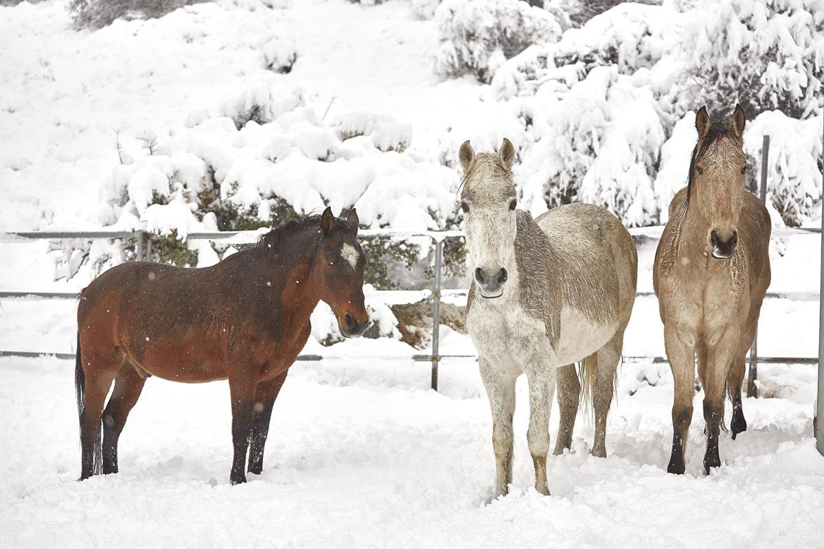 Leona Valley snow
