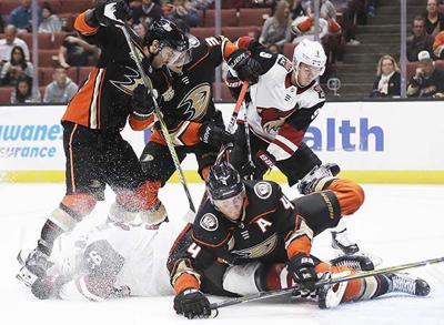 Coyotes Ducks Hockey