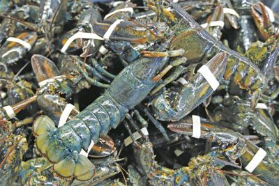 Virus Outbreak Lobster Prices