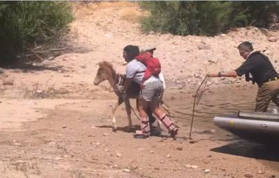 Rosy's rescue! (Courtesy: Salt River Wild Horse Management Group)