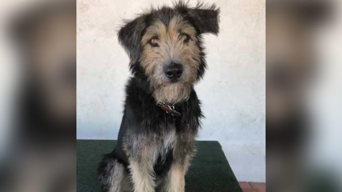 """Monte,"" a 2-year-old terrier mix"