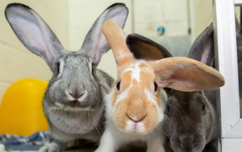 The rabbits were rescued from a home near Warner and Gilbert roads