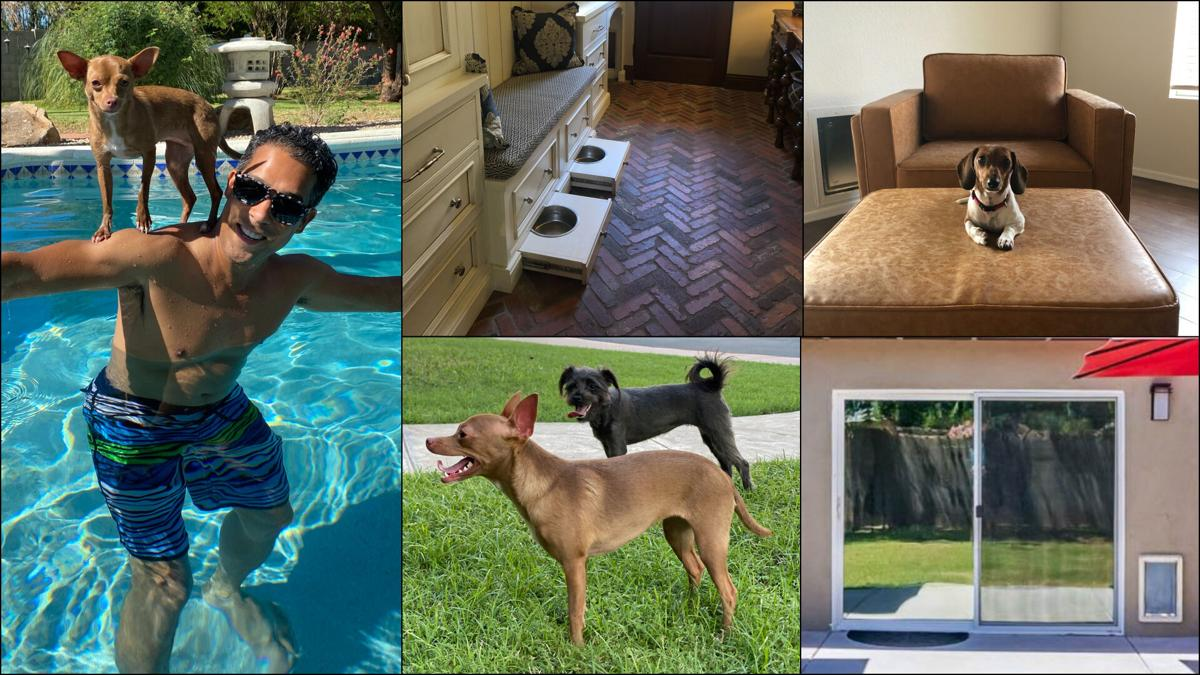What pet-parent homebuyers want in their new homes