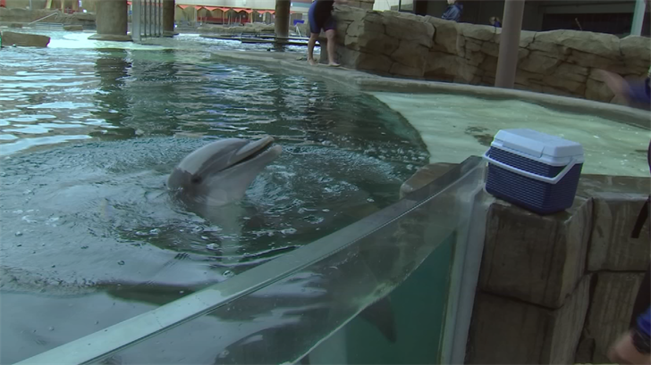 Trainers keep dolphins safe in 119 degree heat
