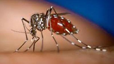 5 facts to make you hate mosquitoes even more