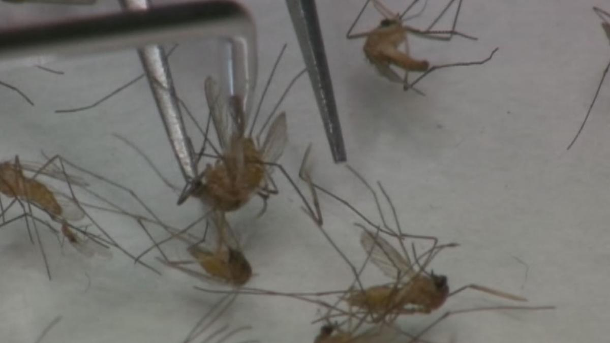 West Nile cases are on the rise