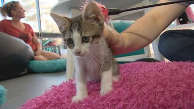 Unwanted pet dumped at new Tempe cat cafe