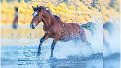 The best time to photograph Salt River wild horses