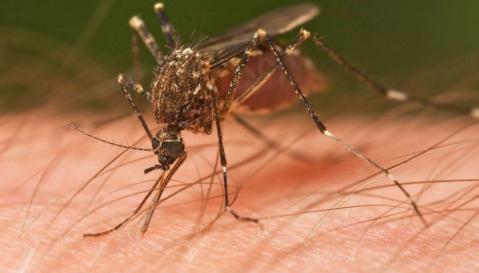 Act now: Officials say prep for mosquitoes before the monsoon