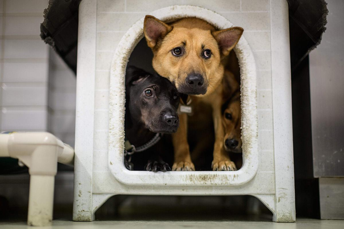 Help dogs and cats cope with separation anxiety when humans return to work