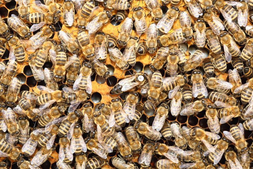 08c19512d8b Teen in Fountain Hills stung by bees