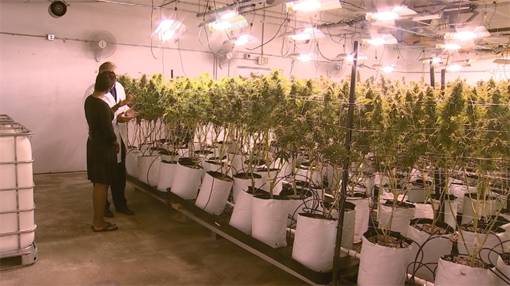 Yetta takes a personal tour of one of Arizona's largest pot dispensaries