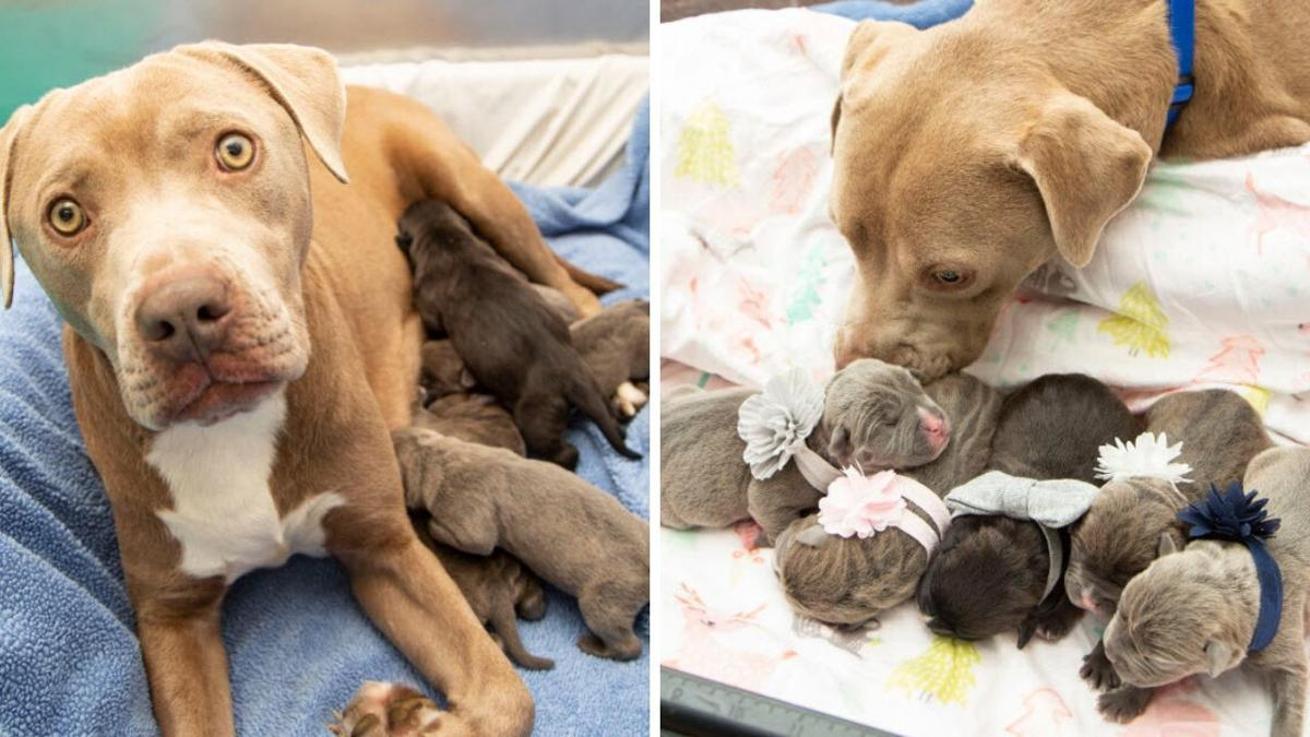 The five American Pit Bull Terriers were born on Jan. 3 at 6:06 p.m.