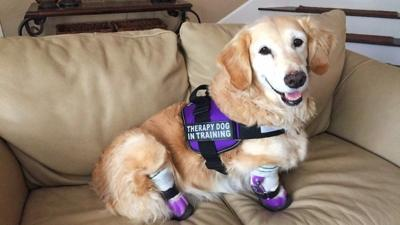 Phoenix pup with four prosthetic legs helps inspire others