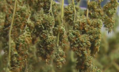 Lawmaker wants to lower medical marijuana card costs in Arizona