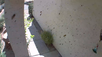 Bees swarm Gilbert front porch