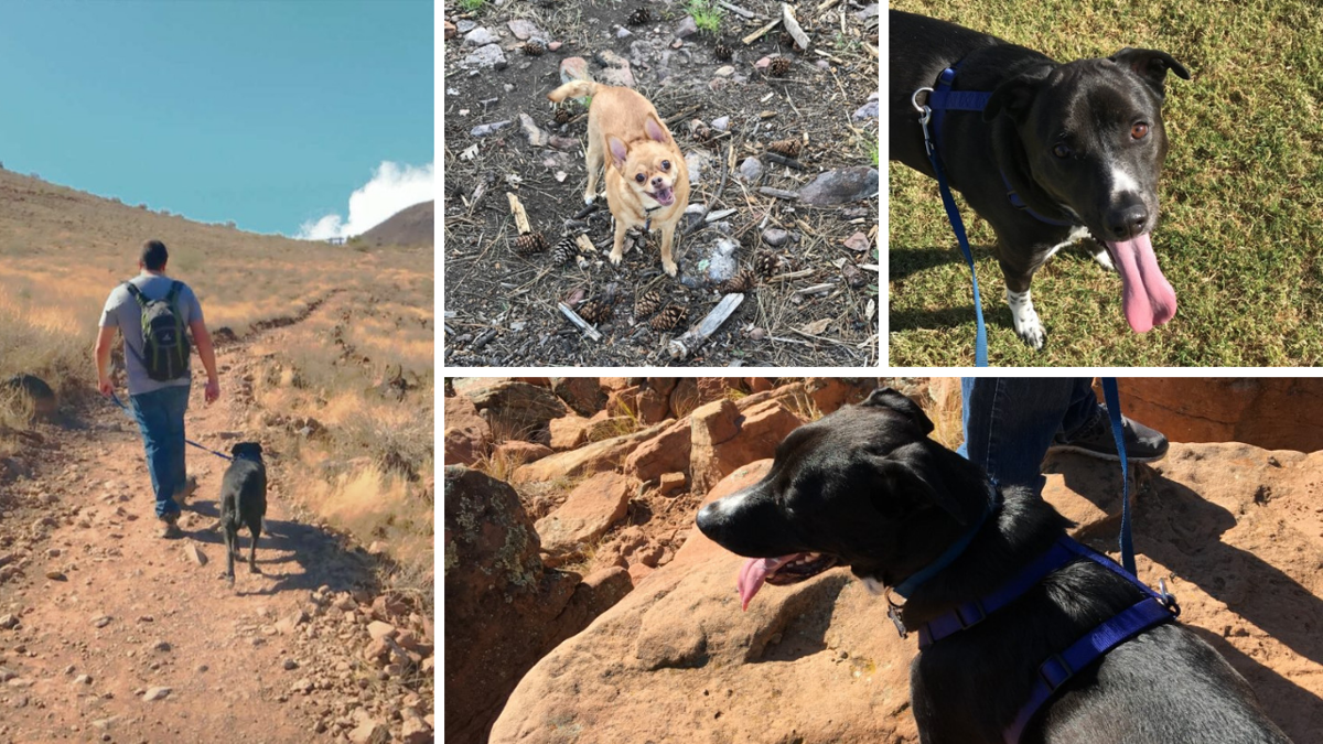 Laura's dogs hiking