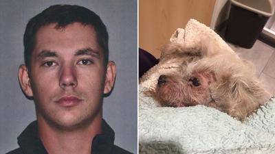 Police: Man buried dog alive because it didn't get along with cat