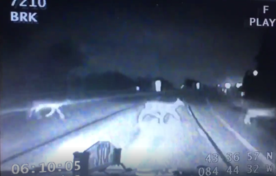 Houghton Lake MSP trooper has close call with deer