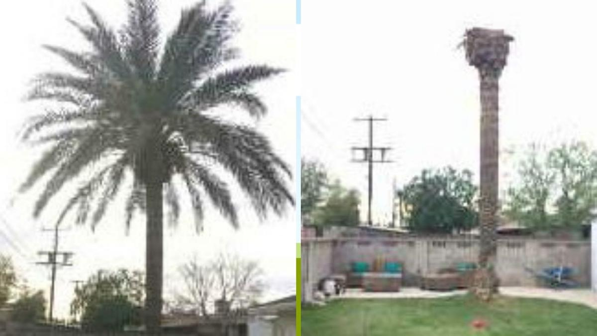 Scottsdale home where palm tree was cut down