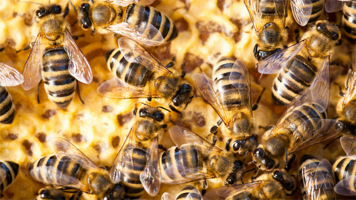 Bee experts warn aggressive bees on the rise in Phoenix area