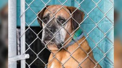 18 puppy mill dogs taken in by AAWL