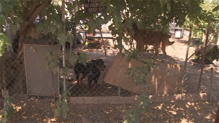 MCSO Animal Crimes Unit keeping an eye out for pets in distress during extreme temps