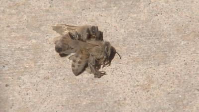 'I literally got jumped by bees,' Glendale woman says of bee attack