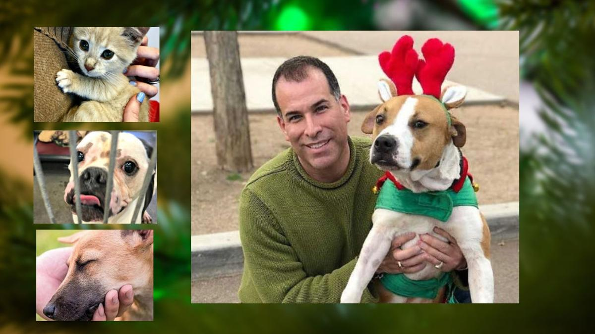 Bringing an early Christmas celebration to pets at the county shelters