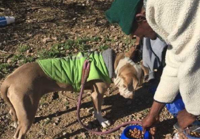 The City of Tempe's homeless outreach team, or HOPE, is seeing an increase in the numbers of people who are homeless with pets.