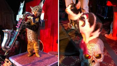 The Amazing Acro-Cats bring their 'cat-tastic' show to AZ