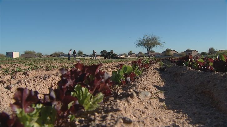 18-acre Phoenix lot being transformed into thriving food oasis