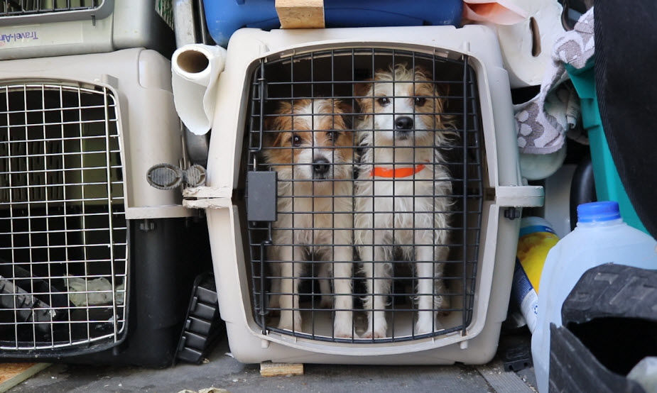 Rescued dogs brought to Phoenix shelter