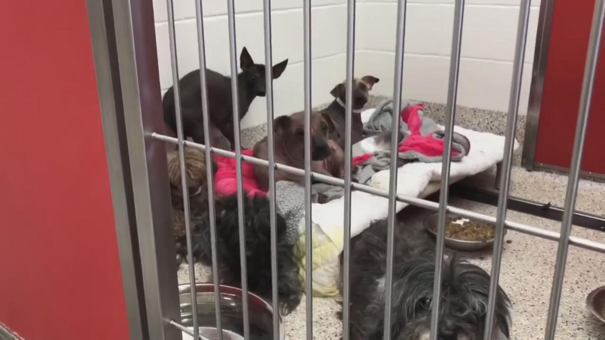 PHOTOS: Animals rescued from 'hoarding case' in Tucson ...