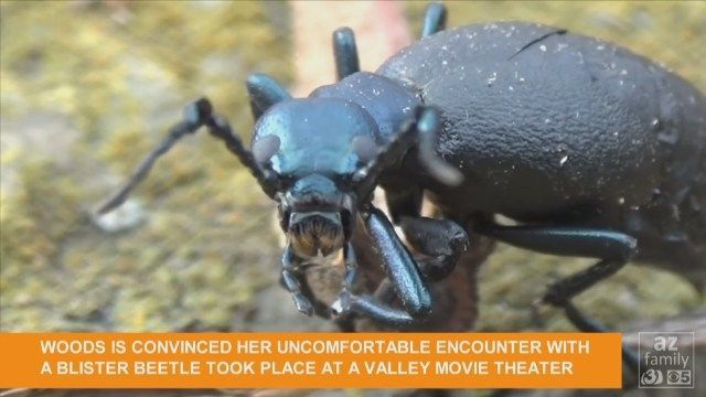 GRAPHIC VIDEO: 'Gross' blister beetle puts Phoenix mom in the hospital