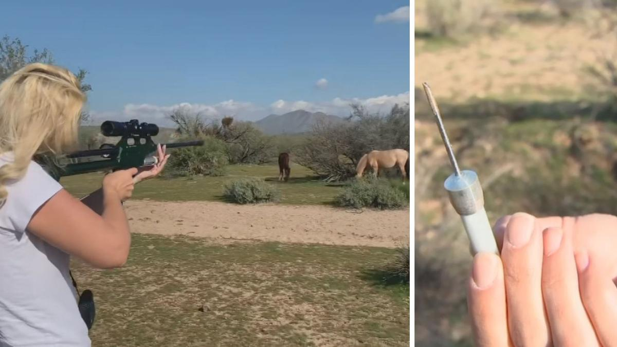 Salt River wild horses are being given birth control