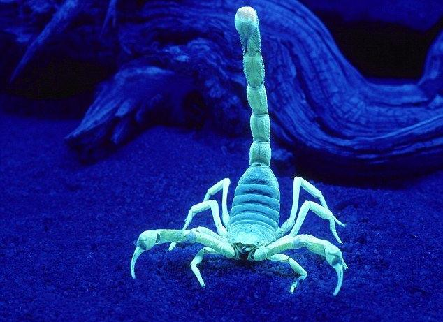 8 scorpion facts to make your skin crawl | Weather Blog