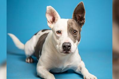 Pet of the week - Addy