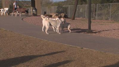 More than 40 Valley dogs diagnosed with rare leptospirosis bacteria