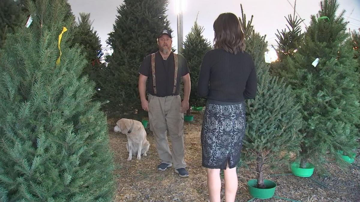 Generator Stolen From Christmas Tree Lot In Chandler