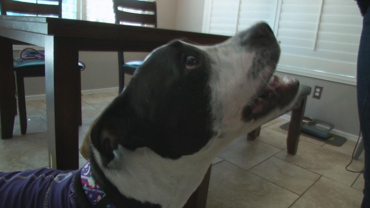 Lilly, dog comes back to Phoenix