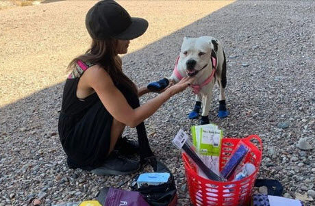 """We know that people experiencing homelessness want to remain with their dogs. That relationship may be the one constant in their lives,"" said Nichole Stevens, Tempe's homeless solutions supervisor."