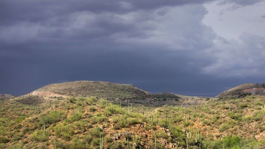 Desert rain: What gives it that sweet smell?