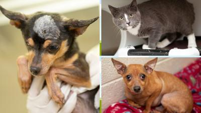 Pets seized from cruelty case seeking foster homes