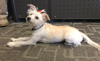In January, the department adopted Poppy, a 2-year-old terrier mix.
