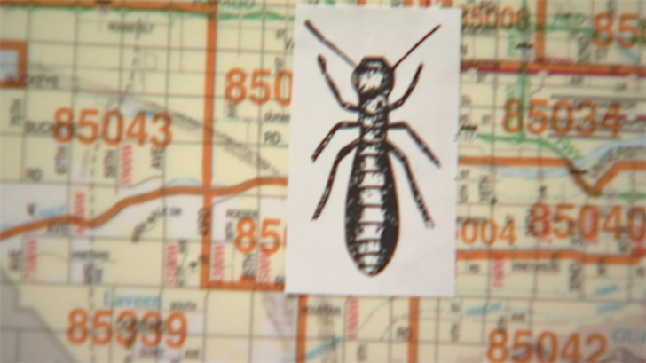 'Bug Hot Zones' show where Phoenix-area insects appear most