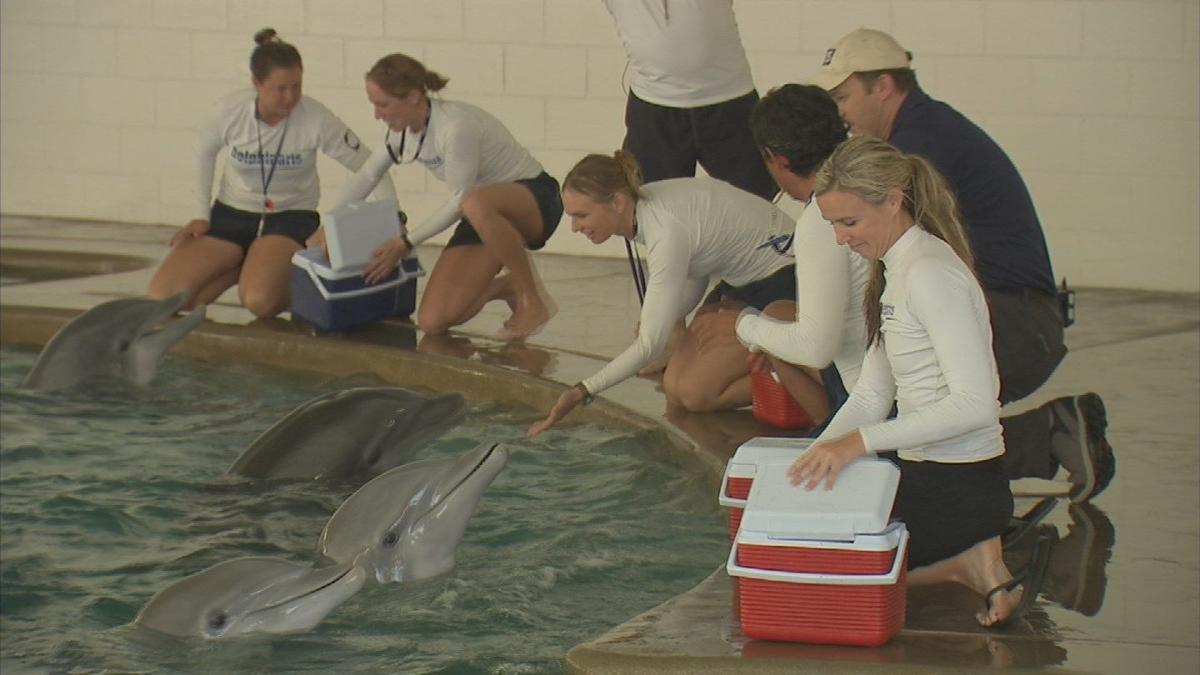 Dolphins arrive for controversial oceanarium in Valley