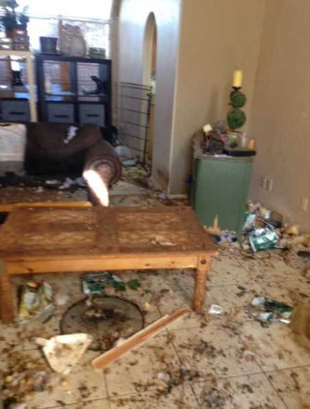 Inside the home of Mesa woman accused of animal cruelty
